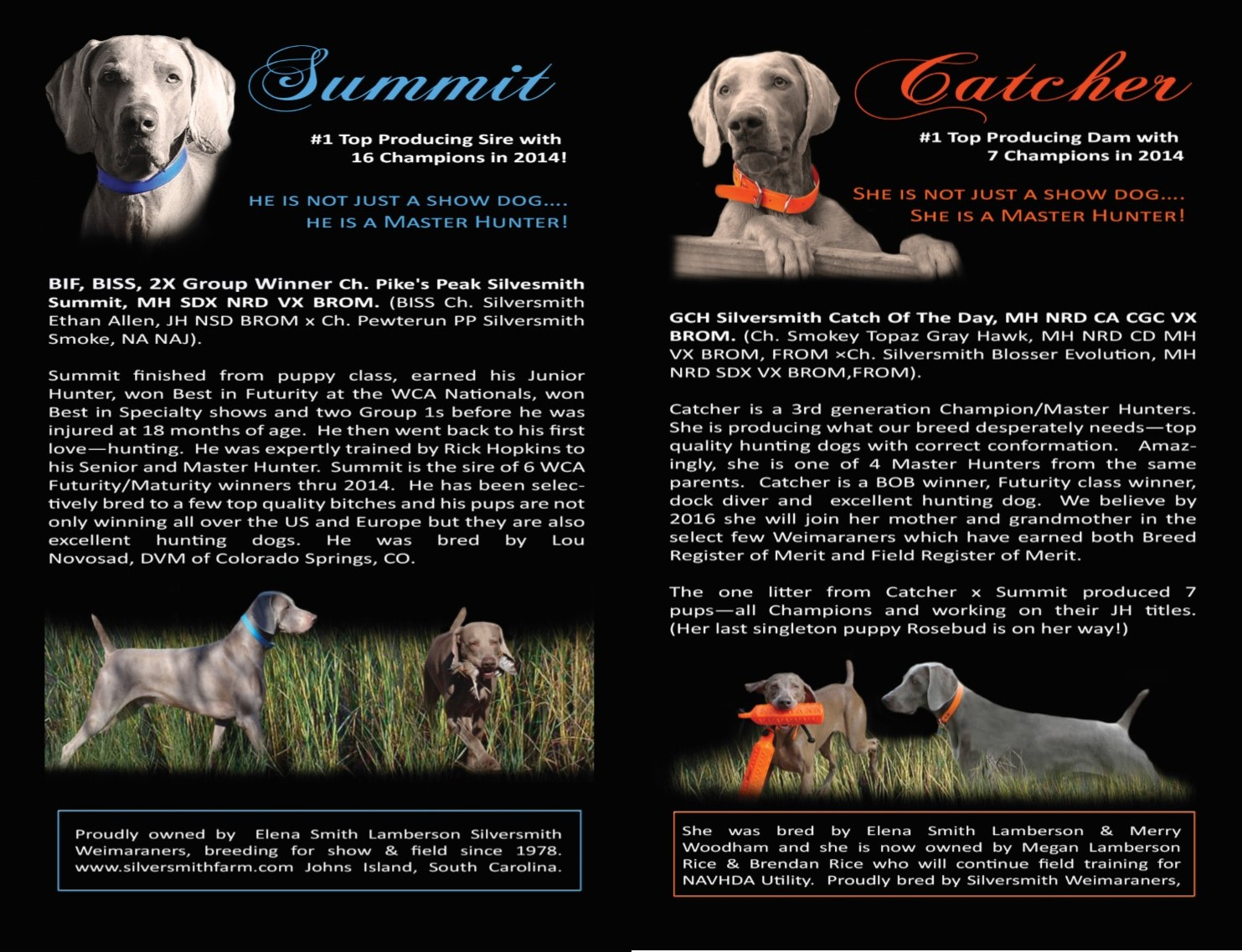 Weimaraners Top quality puppies in South Carolina